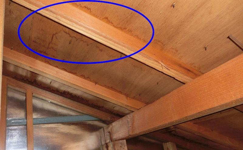 天井裏の雨漏れ調査