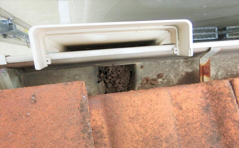 樋の詰まり除去の様子